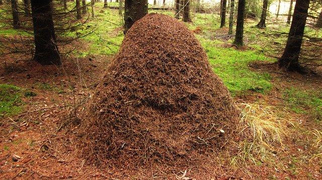 mraveniště v lese