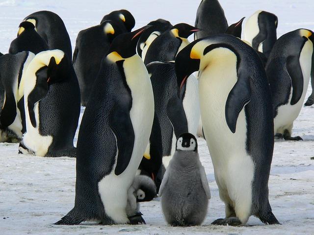 roztomilý tučňáci