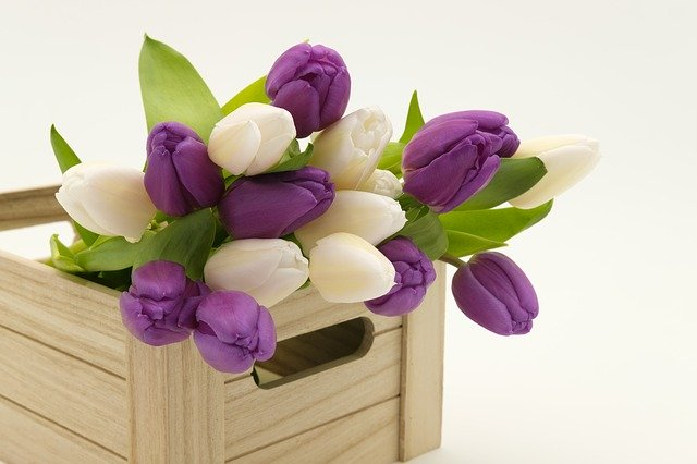 box a tulipány