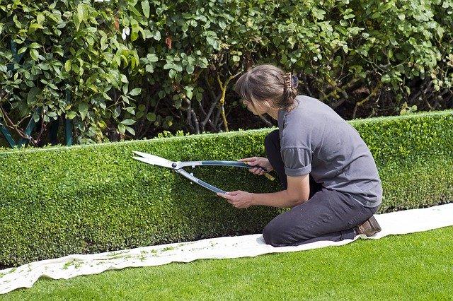 Zahradnice stříhající živý plot